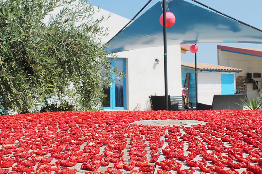 pomodoro essiccato al sole